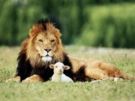 Photo of Se o Senhor é o Meu Pastor, Por que as Coisas Me Faltam?