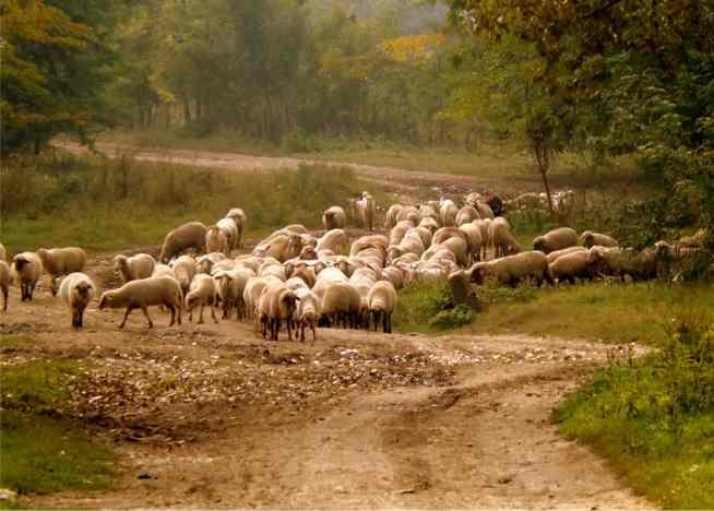 Photo of A Parábola da Separação das Ovelhas e dos Bodes