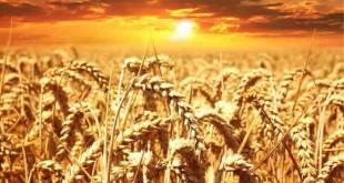 Deus Mantém o Seu Povo Firme Devocional 1 Coríntios
