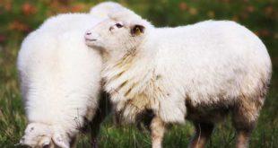 Lição 10 Mansidão Torna o Crente Apto Para Evitar Pelejas