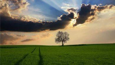 Photo of Todas as Coisas Cooperam Para o Bem Daqueles que Amam a Deus