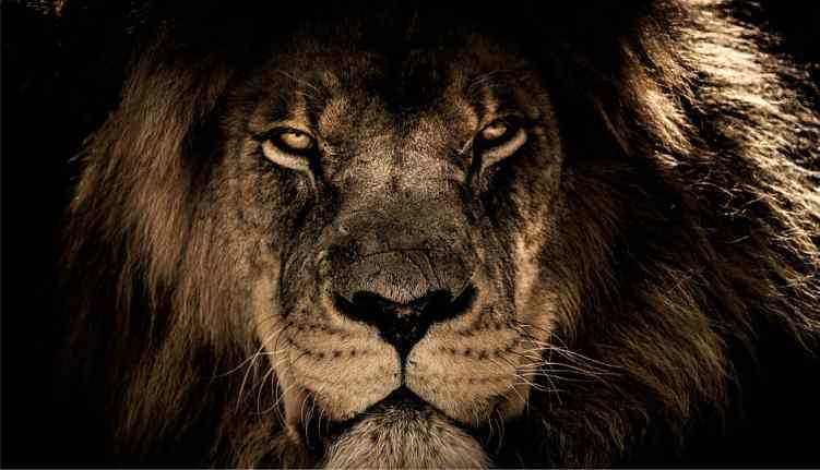 O Que Significa Leão Da Tribo De Judá Quem é O Leão De Judá
