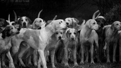 """Photo of O Que Significa """"Ficarão de Fora os Cães""""?"""