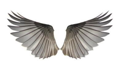 Photo of O Que é Angelologia? O Significado da Doutrina dos Anjos
