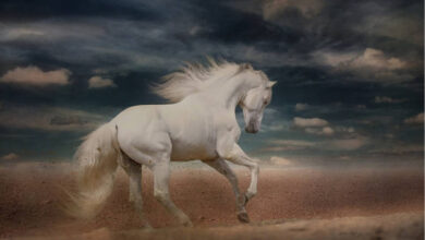Photo of Quem é o Cavaleiro do Cavalo Branco do Apocalipse?